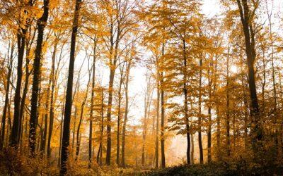 Predelava pohištva in ohranjanje narave